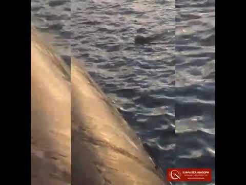 На Камчатке на подводной лодке убили медведицу с детенышем. (❗❗❗❗Осторожно, сцены насилия❗❗❗❗❗)