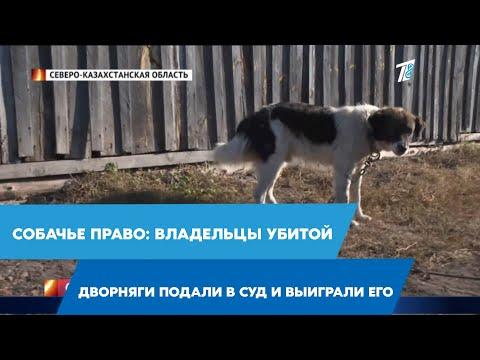 Собачье право: владельцы убитой дворняги подали в суд и выиграли его