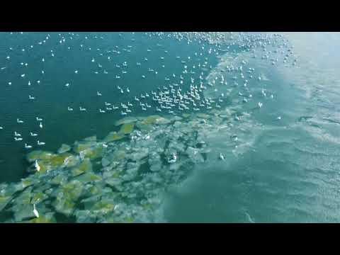 Лебеди, Актау, Караколь, Мангистау, 01 01 2021