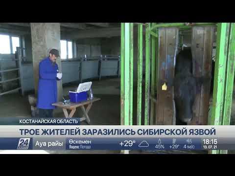 Сибирской язвой заразились трое жителей Костанайской области