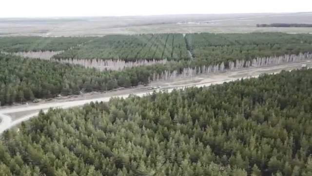 В Казахстане посадят 2 миллиарда деревьев и создадут этноаулы