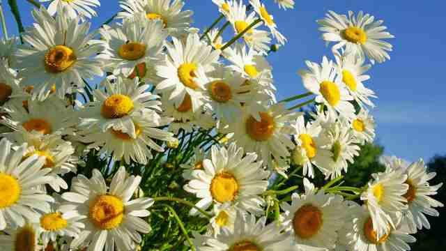 5 съедобных цветов, которые принесут пользу для здоровья