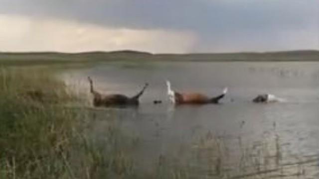 Молния убила табун лошадей в Казахстане