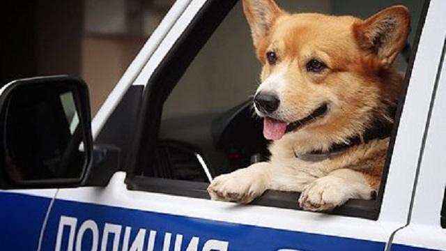 В Костанайской области около пятисот преступлений раскрыто благодаря служебным собакам