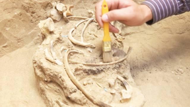 Захоронения сакского периода обнаружены в Костанайской области