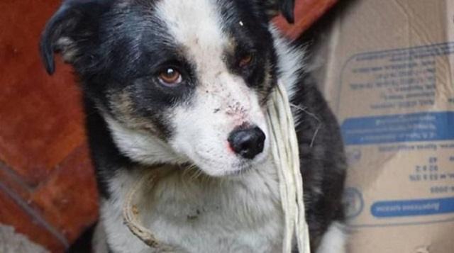 С начала года в Рудном отловлено и уничтожено почти 1500 бездомных животных