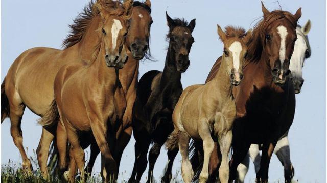 У матери семерых детей пропал табун лошадей в Костанайской области