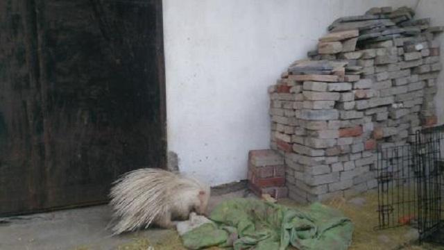 Жители Костаная пытались спасти животное, которое в спасении не нуждалось