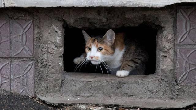 За кормление бездомных кошек оштрафовали женщину в Казахстане