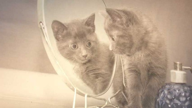 Открытие учёных позволит делать любой узор у кошек