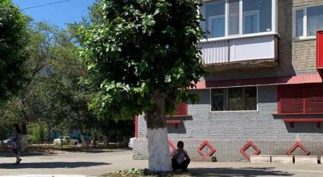 Жители Костаная высказали своё отношение к кронированию и вырубке деревьев