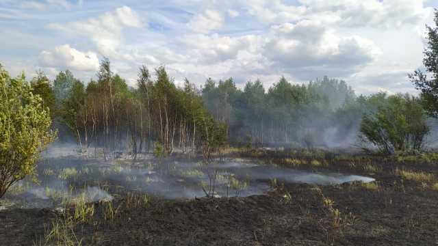 Большой лесной пожар локализовали в Костанайской области