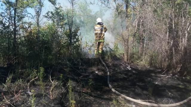 Пять лесных пожаров ликвидировали за сутки в Костанайской области