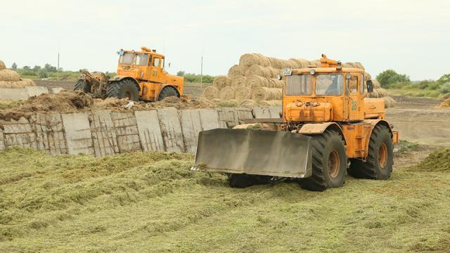 Почему растут цены на сено и отруби в Казахстане