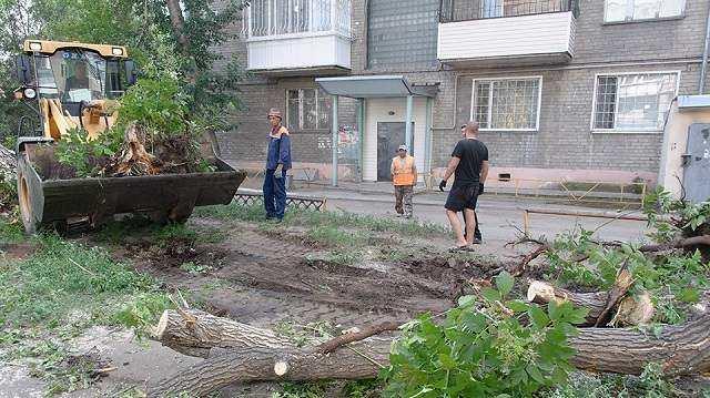 «Проблема с парковкой?»: Во одном из дворов Костаная спилили деревья