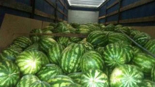 40 тонн арбузов вернули россияне в Костанайскую область