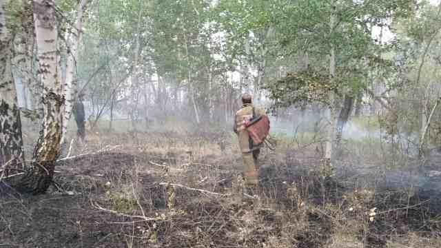 Десятки спасателей тушат лес в Костанайской области
