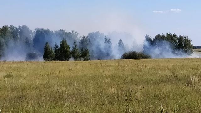 Грозовой разряд стал причиной лесного пожара в Костанайской области