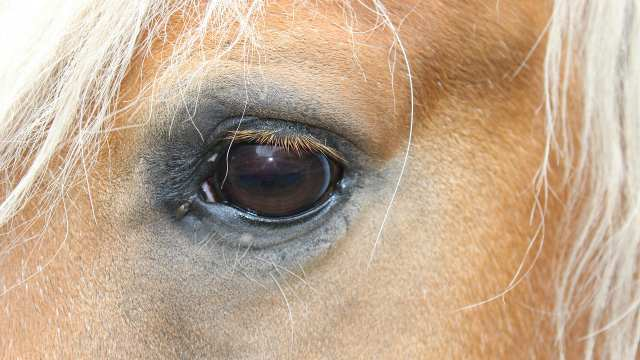 Лошадь скончалась от бешенства в Челябинской области