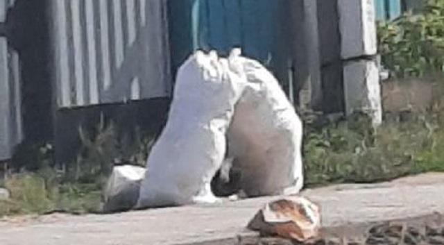 Жители частного сектора в Костанае жалуются на невывоз мусора