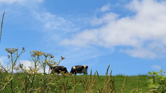 Видео: Сельчанам негде пасти скот в Костанайской области
