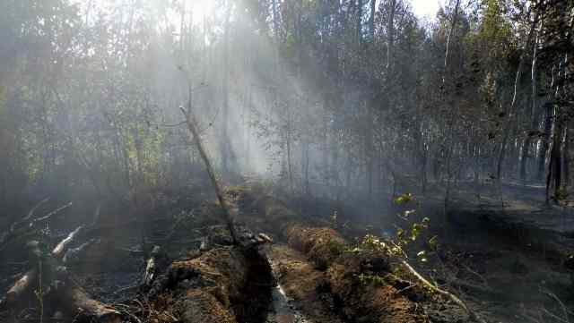 Лесные и степные пожары продолжают полыхать в Костанайской области