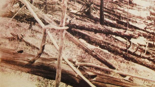 Тунгусский феномен: Почему за 2 недели до падения метеорита из тайги ушли все животные?