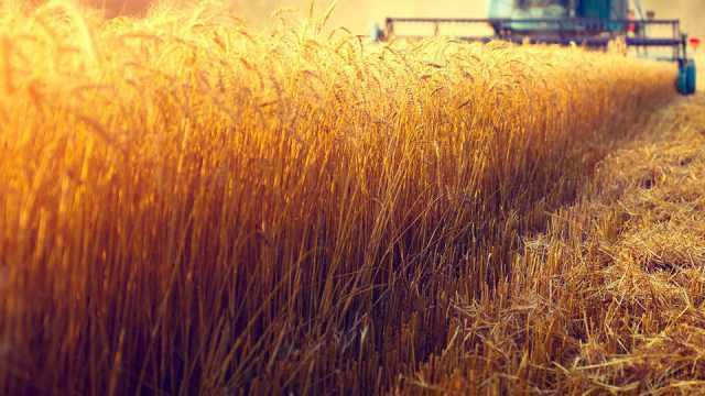 Качество зерна улучшилось в Костанайской области
