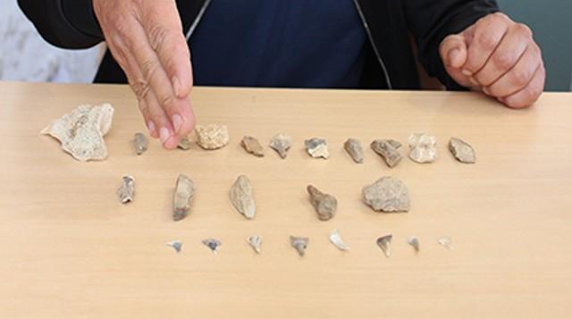 «Многие не поверили!» На стройке в Костанае учитель обнаружил акульи зубы и кости обитателей океана