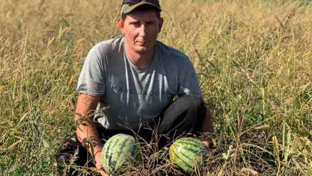 С посевами арахиса и арбузов экспериментируют аграрии Костанайской области