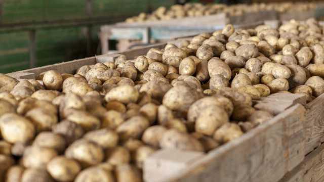Нежданчик: Хранить картофель в подвале смертельно опасно