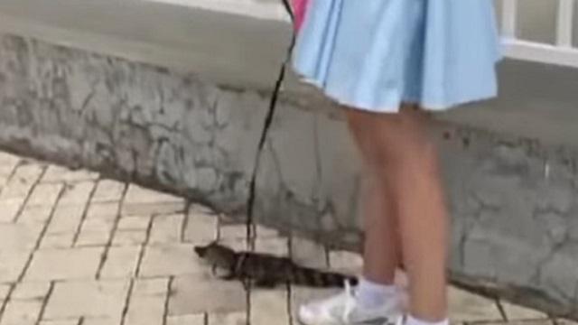 Видео: Живого крокодила вывели на прогулку в центре Алматы
