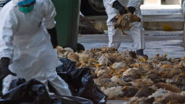 Названа сумма компенсации сельчанам, понесшим убытки из-за птичьего гриппа в Казахстане