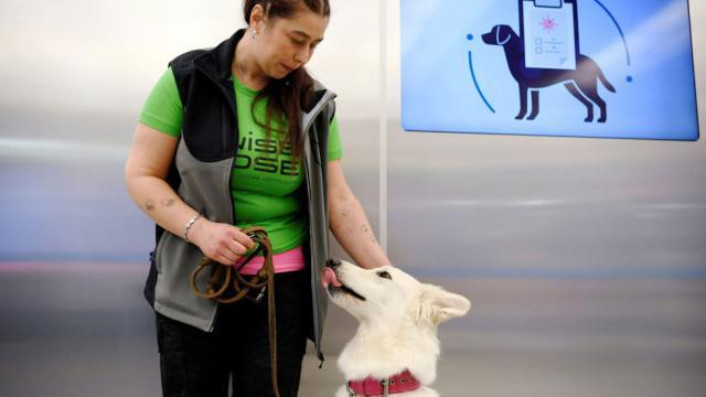 Собак начали использовать для обнаружения коронавирусной инфекции