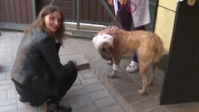 В мусорном контейнере Алматы найдена собака с пробитой головой