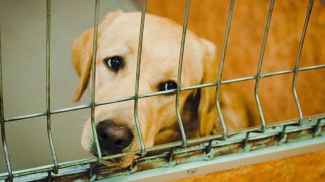 Изнасилование собак в Нур-Султане: Какое наказание грозит зоофилам