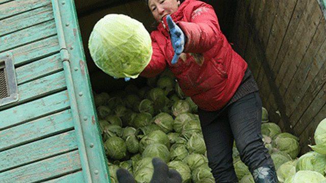 Цены на взлёт: Овощи и фрукты дорожают в Костанайской области