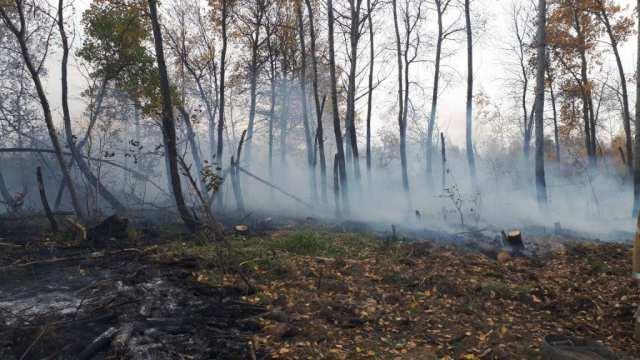 Очередной лесной пожар потушен в Костанайской области