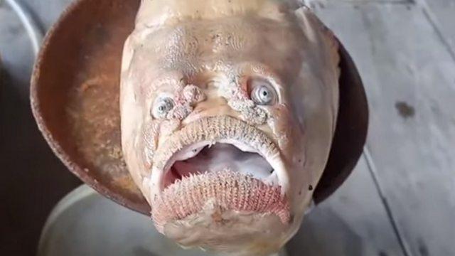 Видео: Рыбак выловил к обеду мутанта с человеческим лицом