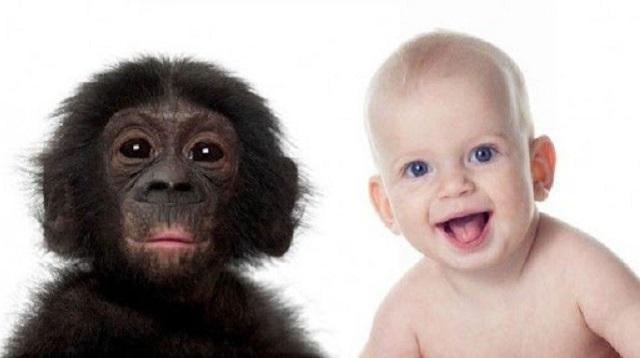 Теория Дарвина доказана на примере пенсионеров и шимпанзе