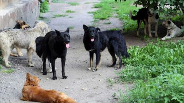 Стая бродячих собак спасла девушку от насильника
