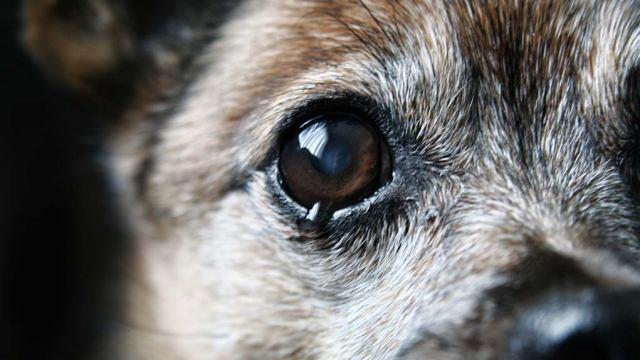 Видео: Живодеры из Шымкента выкололи собаке глаза