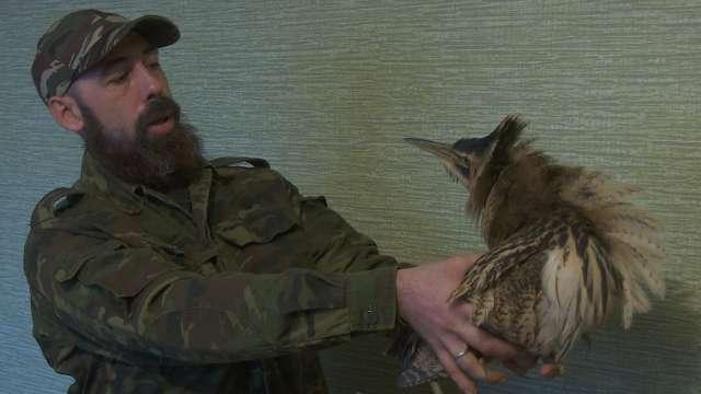 Rara avis: Редкая птица найдена в Костанае