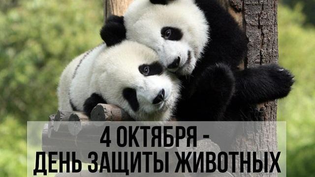 Касым-Жомарт Токаев поручил ужесточить наказание за жестокое обращение с животными