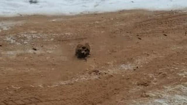 Дорожники посыпали обледенелую дорогу песком с человеческими костями
