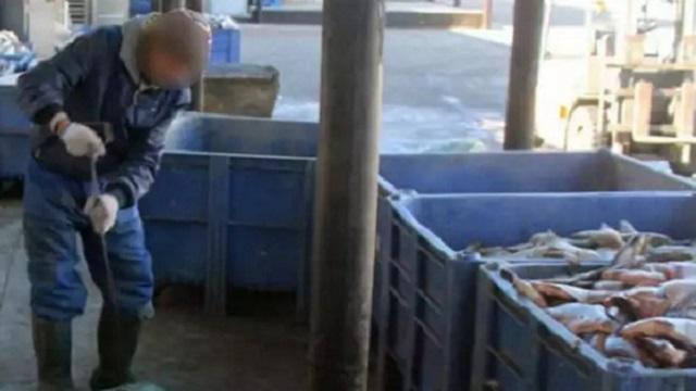Более пятисот килограммов контрабандной щуки обнаружили в автомобиле жителя ВКО