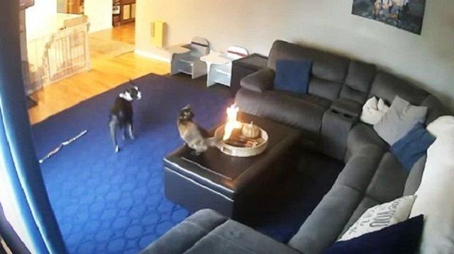 Кот с горящим хвостом попал на видео и стал героем сети