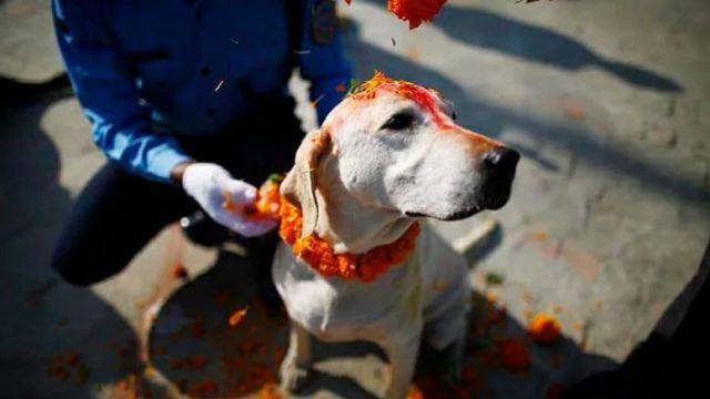 «Кукур Тихар»: Традиционный День собак отметили в Непале