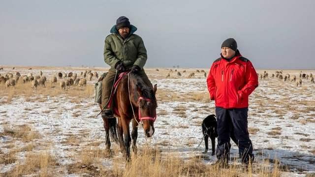 Как казахстанец ушел с госслужбы, чтобы заняться овцеводством