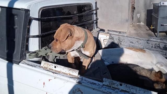 Еще в одной области Казахстана собака напала на 2-летнего малыша